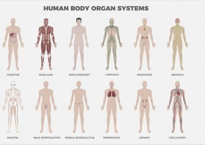 ORGAN-SYSTEMS-1